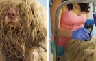Sie öffnete ihren Waschraum mitten in der Nacht um einem Straßenhund zu helfen: Nachdem sie ihr rasiert hatte, war sie sprachlos