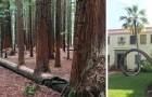 19 Bäume, die einfach nicht