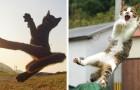 Questo fotografo è specializzato nell'immortalare gatti