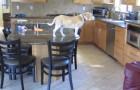 video med Hundar