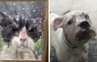 22 animaux qui n'ont aucune intention de rester davantage dehors. Faites-les entrer! :-)