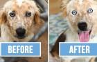 Een meisje adopteert een hond voor haar 25ste verjaardag: de 'Voor-En-Na-Foto's' behoeven geen verdere uitleg
