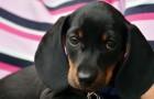 Uno studio conferma e spiega perché gli umani amano i cani molto più dei propri simili