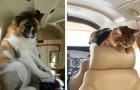 32 volte in cui sull'aereo è salito un passeggero memorabile