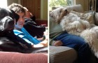 20 humorous photos of dogs behaving like human beings