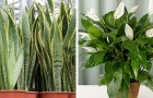 7 Pflanzen, die die Luftqualität im Haus verbessern