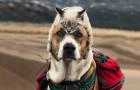 Dieser Hund und diese Katze lieben es, gemeinsam zu reisen und ihre Fotos sind episch