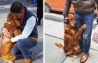 Ce chien est connu dans tout le quartier pour sa curieuse passion: faire des câlins aux passants