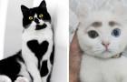 16 animali a cui la genetica ha donato delle combinazioni cromatiche incredibili