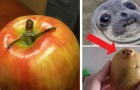 14 common objects that look an awful lot like something else