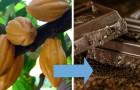 12 verrassende foto's die ons de ECHTE oorsprong laten zien van voedsel