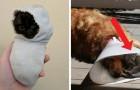 17 dieren die geen oncomfortabeler plek konden vinden om te slapen