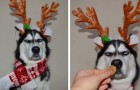 They attempt to create a Christmas photo shoot with their dog but its expression says it all ...