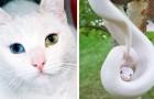 14 animali che hanno contemporaneamente perso e vinto alla lotteria genetica