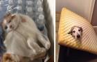 18 fotos de animais que ficaram presos em lugares impensáveis