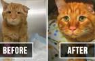 20 animaux qui ont commencé une nouvelle vie après avoir été adoptés