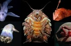 15 strane creature acquatiche che ti faranno passare la voglia di tuffarti in acqua