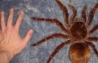 13 real existierende Kreaturen, die dem Wort