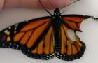 Sie findet einen verletzten Schmetterling: Wie sie ihn rettete ist absurd aber zugleich genial