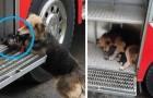 13 fois où les chiens ont surpris les humains avec leurs incroyables actes héroïques