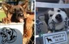 25 images de chiens (et chats) très dangereux derrière le panneau