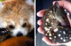 18 bébés animaux que vous n'avez probablement jamais vus auparavant
