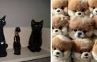 23 dieren die zich perfect weten te camoufleren
