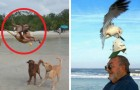 22 original photos taken at exactly the right moment!