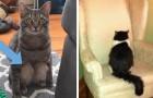 20 scoperte che si fanno quando si adotta un gatto