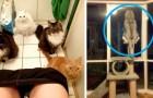 20 animali che hanno trovato la comodità nei luoghi più assurdi