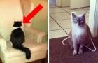 20 Lektionen, die man lernt, wenn man mit Katzen zusammenlebt