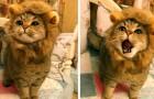 25 animali che hanno fatto un'espressione fantastica al momento giusto