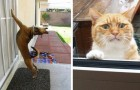 23 animals that have been locked out and want desperately to come back inside