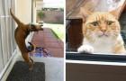 23 animali che sono stati chiusi fuori... e che vogliono disperatamente rientrare