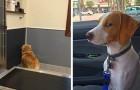 Het precieze moment waarop deze honden zich realiseerden dat ze op weg waren naar de dierenarts en niet naar het park