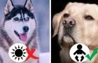 Qual è il cane adatto a te? Ecco una guida che tiene conto della tua personalità e del tuo stile di vita