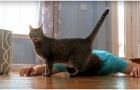 He pretends to feel sick in front of his cat! The animal's reaction will crack you up!