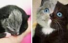 Diese Katze wurde mit einer besonderen Färbung geboren... ein Wunder der Natur