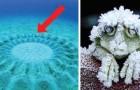 9 curiosità sul mondo animale che sicuramente non avete studiato a scuola