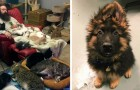 25 photos taken in animal shelters that show abandoned pets in need of love