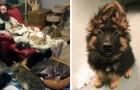 25 foto's gemaakt in de dierenopvang waar je naar kunt blijven kijken