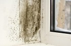 Some natural methods to eliminate mold from walls without using chemicals!