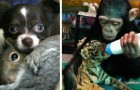 Queste immagini dimostrano che gli animali sanno essere molto più gentili di noi