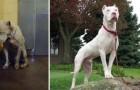 Queste stupende immagini di cani prima e dopo l'adozione vi metteranno in pace con il mondo