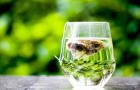 La scienza spiega cosa accade al tuo corpo quando bevi tè verde ogni giorno