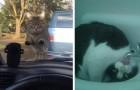 20 hilarische foto's van katten waar je om moet lachen