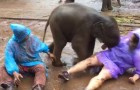 First, the baby elephant hits the woman, but it is his next move that is making this video go viral!