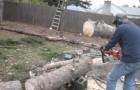 Un uomo taglia il tronco di un albero, ma non si aspetta una reazione così!
