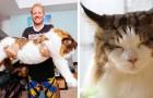 Questo è il gatto più grande di New York... ed è davvero gigantesco!