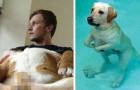 Alcune tra le espressioni più esilaranti che abbiate visto fare ad un cane